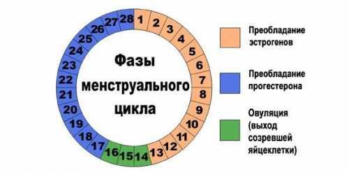 Считать следует каждый месяц, для чего нужно завести себе карманный календарик и там отмечать первый день появления кровянистых выделений