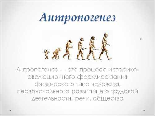 Антропогинез