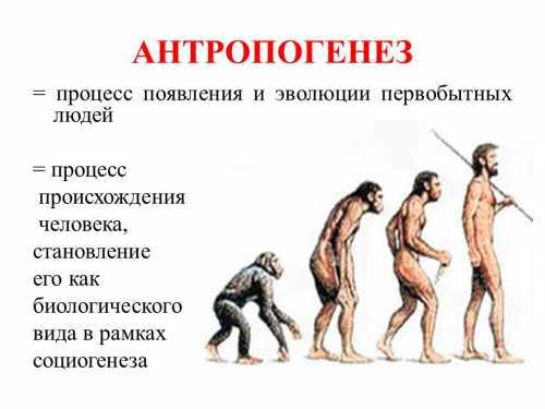 Однако археология и пале онтология позволяют исследовать рацион питания различных видов и его влияние на эволюцию анатомии и поведения