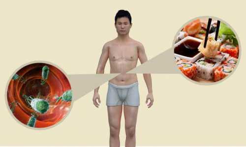 Интересно, что неимея органов дыхания икровеносной системы, они имеют нервную, выделительную, половую и пищеварительную системы