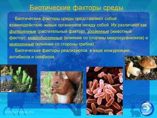 Биотические факторы среды весной