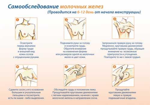 Перед менструацией может ли болеть грудь